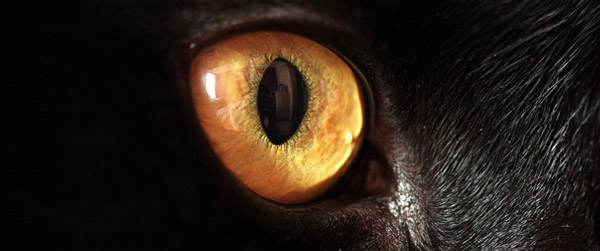 Cat Eye