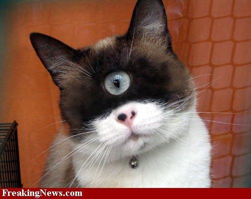 Photoshop Cat Eyes Cat Photoshop