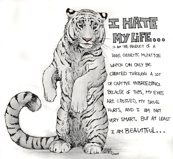 i hate my life – white tigers are not natural