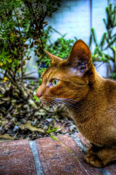 HDR Cat