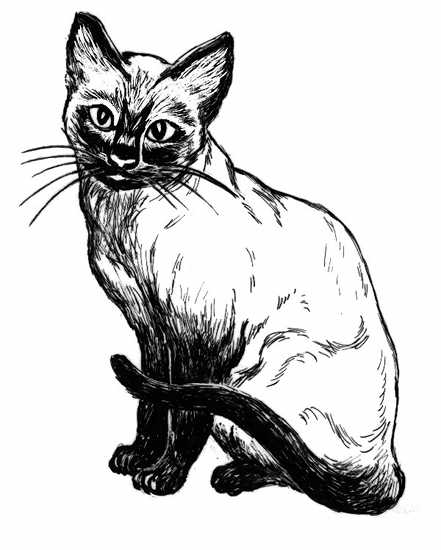Siamese Cat Line Drawing