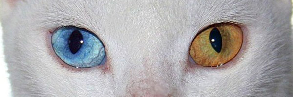 Cat With Pretty Eyes